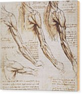 Leonardo: Anatomy, 1510 Wood Print