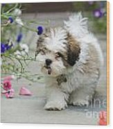 Lhasa Apso Puppy Wood Print
