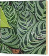 Light And Dark Green Leaves Wood Print