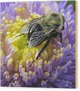 Light Nectar Wood Print