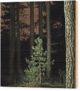 Lightpainting The Pine Forest New Growth Wood Print by Dirk Ercken