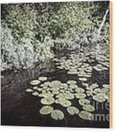 Lily Pads On Dark Water Wood Print
