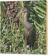 Limpkin And Apple Snail Wood Print
