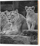 Lioness And Cubs Wood Print