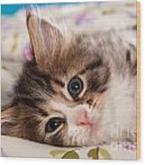 Little Cat Kitten Wood Print