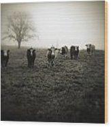 Livestock Wood Print
