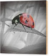 Lone Ladybug Wood Print