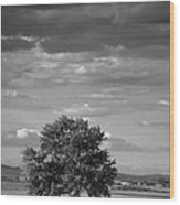 Lone Tree Wilder Idaho Wood Print