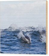 Long-beaked Common Dolphins Wood Print