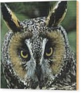 Long-eared Owl Up Close Wood Print