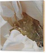 Long-stemmed White Rose Wood Print
