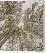 Looking Up At Snow Covered Tree Tops Wood Print