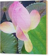Lotus Lilly Wood Print