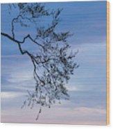 Low Angle View Of Tree At Dawn, Dark Wood Print