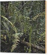 Loxahatchee Refuge-4 Wood Print