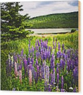 Lupin Flowers In Newfoundland Wood Print by Elena Elisseeva