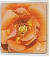 Macro Image Of A Rose Wood Print