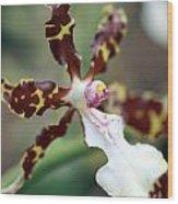 Macro Orchid Wood Print