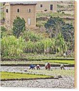 Madagascan Paddyfield Wood Print