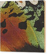 Madagascan Sunset Moth Wing Detail Wood Print
