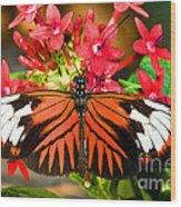 Madeira Butterfly Wood Print