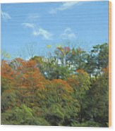 Magic Forest Wood Print