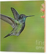 Magnificent Hummingbird Wood Print