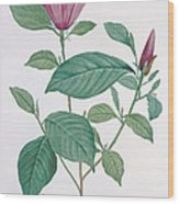 Magnolia Discolor, Engraved By Legrand Wood Print