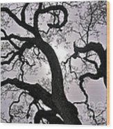 Majestic Oak Wood Print