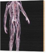 Male Anatomy Wood Print