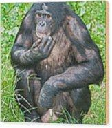 Male Bonobo Wood Print