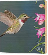 Male Broad-tailed Hummingbird Wood Print