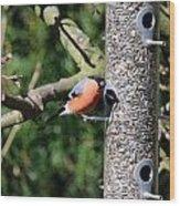 Male Bullfinch Wood Print