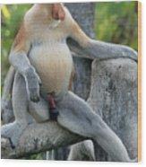 Male Proboscis Monkey Wood Print