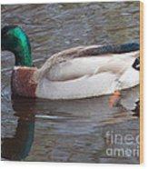Mallard Duck Wood Print