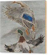Mallard Pair Wood Print