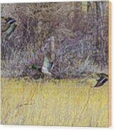 Mallards In Flight Wood Print