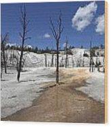 Mammoth Hot Spring Area Wood Print