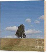 Manassas National Battlefield Park Wood Print