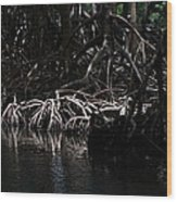 Mangrove Forest Of The Los Haitises National Park Dominican Republic Wood Print
