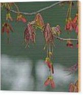 Maple Red Samaras Wood Print