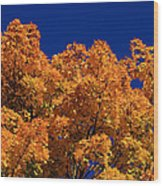Maple Tree In Autumn Wood Print