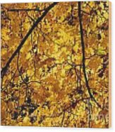 Maple Tree In Yellow Fall Colors Wood Print