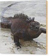 Marine Iguana Galapagos Wood Print
