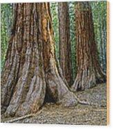 Mariposa Grove Wood Print