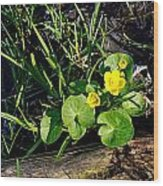 Marsh Marigold Wood Print