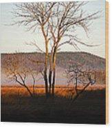 Marsh Tree Reflections Wood Print
