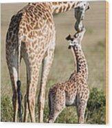 Masai Giraffe Giraffa Camelopardalis Wood Print