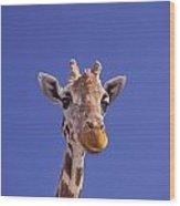 Masai Giraffe, Serengeti, Africa Wood Print