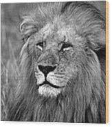 Masai Mara Lion  Wood Print